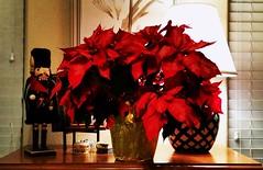 Christmas Floral (Patricia Henschen) Tags: holiday christmas floral poinsettia nutcracker flower coloradosprings colorado