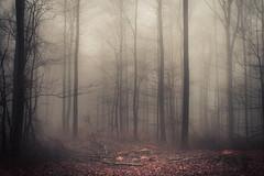 Path of Destruction (Netsrak) Tags: baum bäume eu europa europe forst januar january landschaft natur nebel wald fog forest landscape mist nature tree trees winter woods