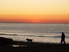 Primer amanecer 2019 (3) (calafellvalo) Tags: amaneceralbasolcalafellseaalbadasunrise amanecer sunrise amanecerdelaño2019 alba albada sea mar calafellvalo contraluz calafell aves gaviotas