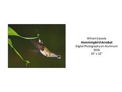 "Hummingbird Acrobat • <a style=""font-size:0.8em;"" href=""https://www.flickr.com/photos/124378531@N04/31707758677/"" target=""_blank"">View on Flickr</a>"