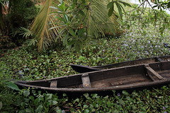 Alleppey.India (VincenzoMonacoo) Tags: canon 6d tamron 2470 india travel adventure nature leica nikon kerala alleppey backwaters boats river