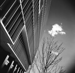 Winter (Timothy Lewis Jr.) Tags: holgaphotos holgan holga120n trix analoguefilm architecture blackandwhite blackandwhitefilm bw berkeley building redfilter trixpushed2stops trix1600