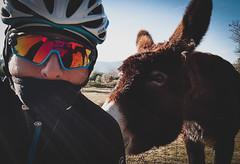 Donkey (bikes.and.life) Tags: cycling cycle cyclist cyclingphotos color cyclingpics cyclinglife bike bikes donkey kask oakley