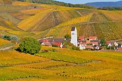 Katzenthal (Haut-Rhin, F) (pietro68bleu) Tags: alsace vignoble automne couleursorangées église clocher village collinessousvosgiennes