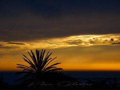 Palm tree (Paco CT) Tags: arbol atardecer backlit cielo mar sky sunset tree agua contraluz crepuscule crepusculo dusk ocaso puestadesol sea sundown twilight water agrigento sicily italy outdoors tourism palm palmtree colors yellow pacoct 2019