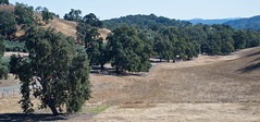 View from Whalebone (ronkacmarcik) Tags: nikkor357028 california pasorobles