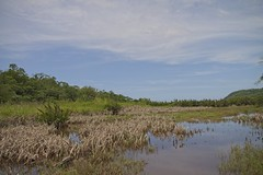Campos alagados (mcvmjr1971) Tags: yellow ilha do pontal lagoa piratininga niteroi mmoraes nikon d800e lens sigma 2435 art f20