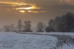 Winter morning (adambotond) Tags: adambotond winter snow sunrise forest field tree outdoor landscape landscapephotography nature naturephotography canon canoneos1dx canonef70200f4lisusm sun mist misty morning cloud sky