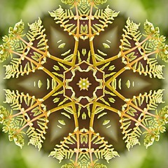 Kaleido Abstract 1913 (Lostash) Tags: art photography edited abstract kaleidoscopes patterns shapes symmetry