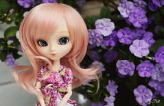 Violets (♪Bell♫) Tags: pullip alice du jardin susanne rosenthal groove doll garden