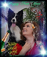 Happy New Year 2019 (ASHA THE BORDER COLLiE) Tags: happy new year 2019 connie asha border collie ashathestarofcountydown kells county down photography partying littledoglaughedstories