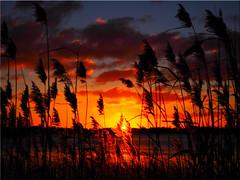 Sunset  at the  Lake  Poenitz (Ostseetroll) Tags: deu deutschland geo:lat=5403702421 geo:lon=1070098329 geotagged pönitzamsee pönitzersee schleswigholstein sonnenuntergang sunset olympus em5markii