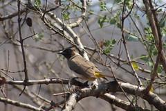 Bird (Rckr88) Tags: krugernationalpark southafricakrugernationalpark southafrica kruger national park south africa birds bird trees tree naturalworld nature outdoors wilderness wildlife