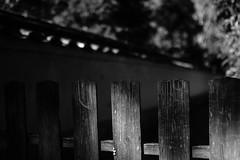 fence (HarQ Photography) Tags: monochrome blackandwhite 7artisans 28mmf14asph fujifilm fujifilmxseries xt2 wood