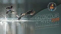 Concours HIVER 2019 (ÇhяḯṧtÖρнε) Tags: concourshiver2019 concours ladddo mazères ariège h2o wwwlesamisdudomainedesoiseauxfr