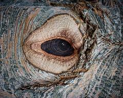 Eternal Gaze (Doug.King) Tags: eye tree knot wood wooden bark blemish