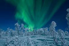 Moonlit forest (B_Olsen) Tags: northernlights auroraborealis nordlys winter forest snow frost senja troms norway moonlight måneskinn cold arctic polar vinterskog nikond800