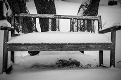 Backyard Snow Photos (Phil Roeder) Tags: desmoines iowa snow snowfall blizzard winter blackandwhite monochrome canon6d canon50mmf18 bench