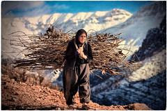 K U R D I S T A N - 💛❤💚كوردستان💋 (Kurdistan Photo كوردستان) Tags: zagros zoregva zazaki zaxo zindî azadî azmar xebat xaneqînê christianity cegerxwin van love mahabad music arbil democracy freedom genocide herêmakurdistanê hawler hewler hewlêr halabja herêma judaism jerusalem kurdistan4all lalish qamishli qamislo qamishlî qasimlo war erbil efrînê refugee revolution rojava referendum yezidism yazidis yârsânism unhcr peshmerga peshmerge grass tree landscape field sky mountain animal forest livestock portra people building night 2019 nature roa wall