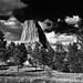 Prairie Grasses, Ponderosa Pines and Blue Skies with Clouds for a Setting with Devils Tower (Bear Lodge) (Black & White)