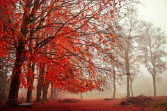 Autumn forest (Marco Allegro) Tags: