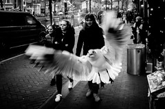 snacktime (Gerrit-Jan Visser) Tags: amsterdam bird chips gull people snack streetphotography tourist blackandwhite food eating hungry streetfood fly escape thief cheeky