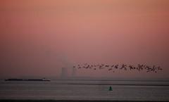 WesterSchelde (Omroep Zeeland) Tags: westerschelde co2 kerncentrale doel zeeland zonsondergang vogels birds binnenvaart schip koeltorens