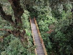 Most Forest, Cameron Highlands (sebd_ch) Tags: cameron highlands mousse