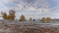 Westruper Heide (michel1276) Tags: westruperheide haltern halternamsee nordrheinwestfalen germany deutschland landschaft landscape heide