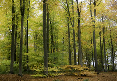 After the rain (Jenne Barneveld) Tags: autumn autumncolors autumnleaves autumntree november veluwe colourful colours naturephotography nature woods forest breathtaking morningwalk netherlands