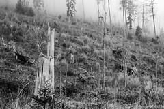 The forester's workplace (wketsch) Tags: at autumn duskforest foggy schöckl nature trekking fog styria hill trees landscape perch forester ranger worklplace misty dusk backlight monochreome bw