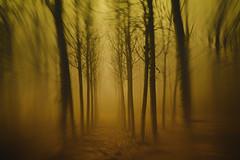 Cercando il mosso...tra i pioppi (Gianni Armano) Tags: cercando il mossotra pioppi foto gianni armano photo flickr