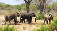 _DSC9011 (acomb) Tags: tanzania roadtrip ruaha tandala