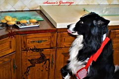 I've licked them so they're mine (ASHA THE BORDER COLLiE) Tags: funny christmas dog picture border collie mince pies ashathestarofcountydown connie kells county down photography