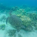 Turtle in Hilo Big island Hawaii