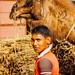 Boy With Camel, Uttar Pradesh India