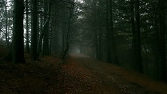 Eerie trek through the woods! (BillyGoat75) Tags: eerie track woods forest trees path ardenmoor highparadise northyorkshire