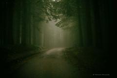 (Monica Muzzioli) Tags: forest autumn mood fog light trees wood track magic fall mountains foresta alberi