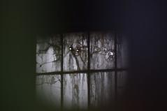 Stash (Mado46) Tags: bxl06 mado46 dortmund phönixwest phoenixwest fenster windows dark versteck stash broken zerbrochen 444v4f