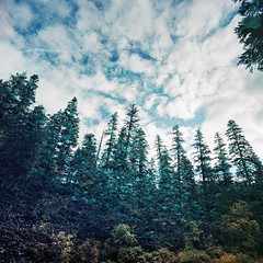Spectacular....But Not Specular Reflection (Aaron Bieleck) Tags: hasselblad500cm 120film analog 6x6 square film filmisnotdead hasselblad mediumformat wlvf tamolitchbluepool oregon hiking lake reflection kodakportra160 60mmct forest trees
