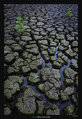 Sprouting Hope (Ilan Shacham) Tags: landscape dry water mud drymud cracks growth plant green hope fineart fineartphotography channels israel kinneret seaofgalillee view scenic nature beauty graphic