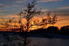 Sunset (iJoydeep) Tags: sunset dusk norway nikon d7000 ijoydeep joydeepsphotography nature fjord vestfold sandefjord