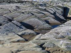 46/52/18 Beach forms (Hodgey) Tags: rocks barnacles beach 52weeksfornotdogs