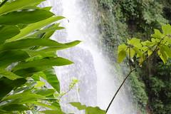 #green #natureza #naturaleza #verde #cascata #RS #RioGrandedoSul #Progresso #Brasil #gaucho (mauricauduro) Tags: cascata brasil rs verde riograndedosul green gaucho progresso naturaleza natureza