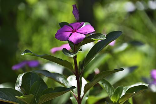 Flower with sunlit petals