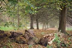 DSC_3251 (AperturePaul) Tags: rotterdam netherlands nikon d600 nature autumn bokeh tree trees