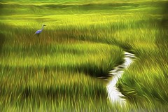 Bird in Marsh Grass (Rusty Russ) Tags: egret bird marsh grass stream water parker river wildlife refuge newburyport colorful day digital art graffiti window flickr country bright happy colour eos scenic america world sunset beach sky red nature blue white tree green light sun cloud park landscape summer city yellow people old new photoshop google bing yahoo stumbleupon getty national geographic creative composite manipulation hue pinterest blog twitter comons wiki pixel artistic topaz filter on1 tinder russ seidel artist outside facebook