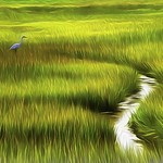 Bird in Marsh Grass thumbnail