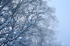 Foggy morning (ChemiQ81) Tags: polska poland polen polish polsko chemiq польша poljska polonia lengyelországban польща polanya polija lenkija ポーランド pólland pholainn פולין πολωνία pologne puola poola pollando 波兰 полша польшча outdoor widok zimowy sky snow śnieg winter zima wojkowice tree drzewo covered white bw black blackandwhite field forest landscape fog foggy mgła