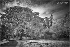 """Woodshed (""""A.S.A."""") Tags: sheds wood trees path woodland countryside rural infrared830nm cloud sky britain sonya7rinfrared830nm blackwhite mono monochrome greyscale niksoftware silverefex asa2018 zeissloxia2821"""